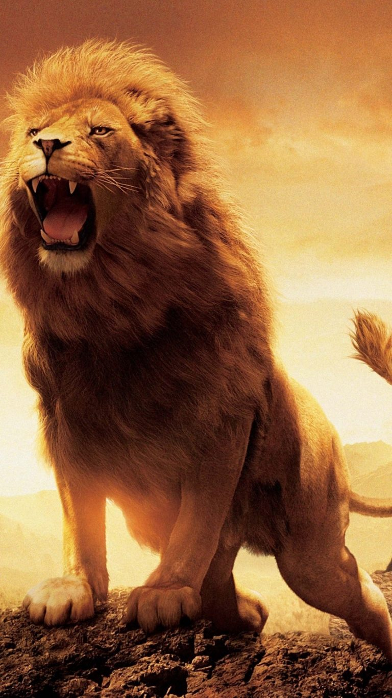 lion wallpaper 44