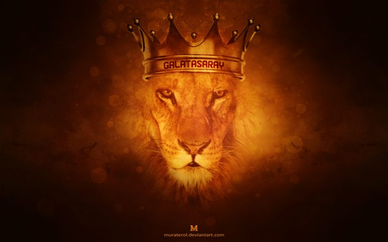 lion wallpaper 46