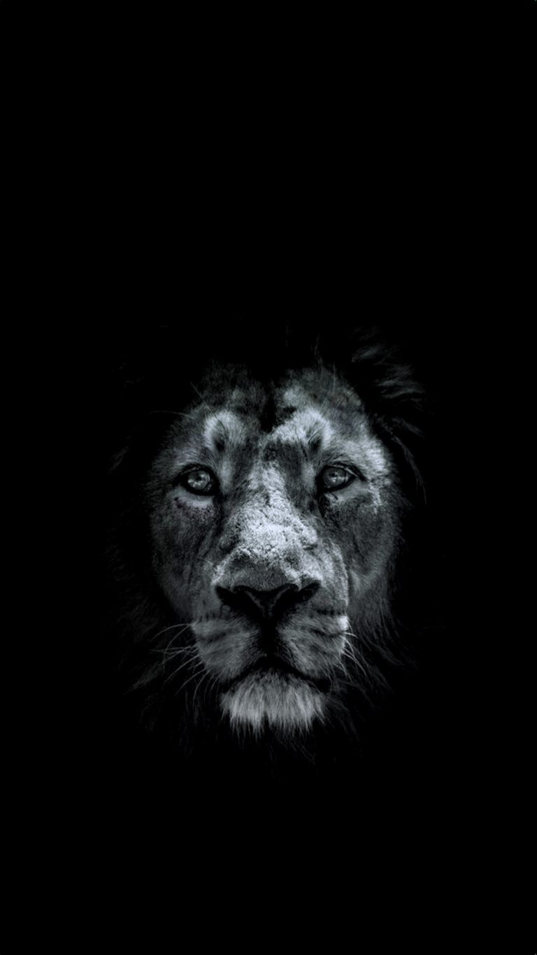 lion wallpaper 53