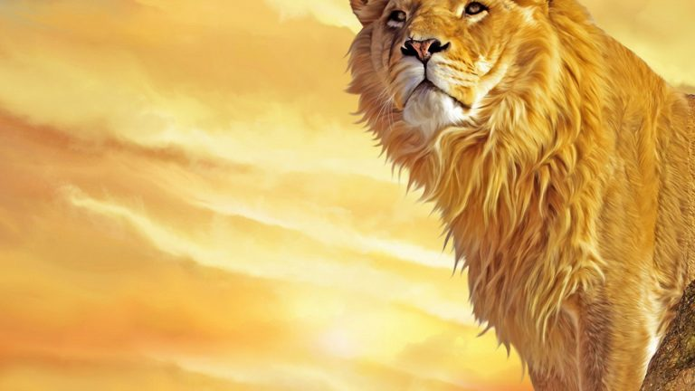 lion wallpaper 56