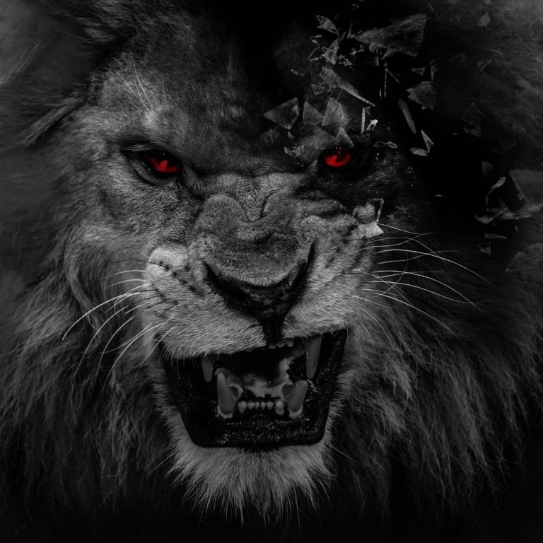 lion wallpaper 75