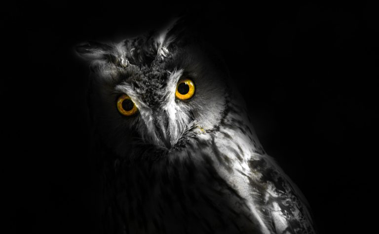 owl wallpaper 176