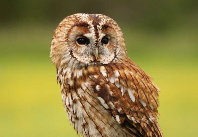 owl wallpaper 192