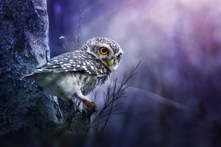 owl wallpaper 195