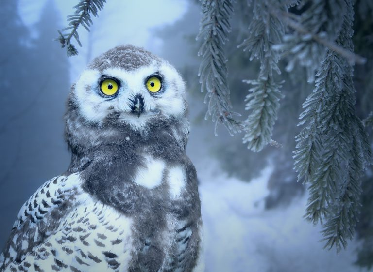 owl wallpaper 205