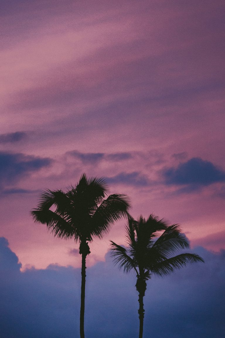 palm wallpaper 139
