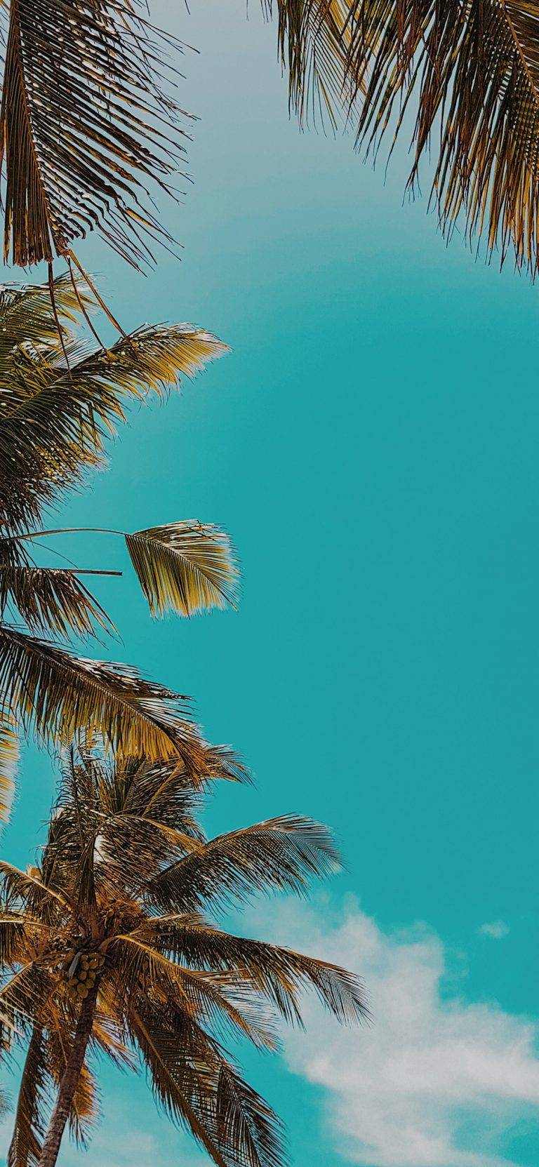 palm wallpaper 142