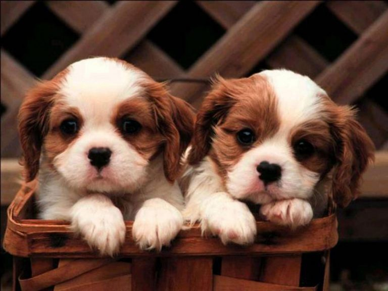 puppy wallpaper 172