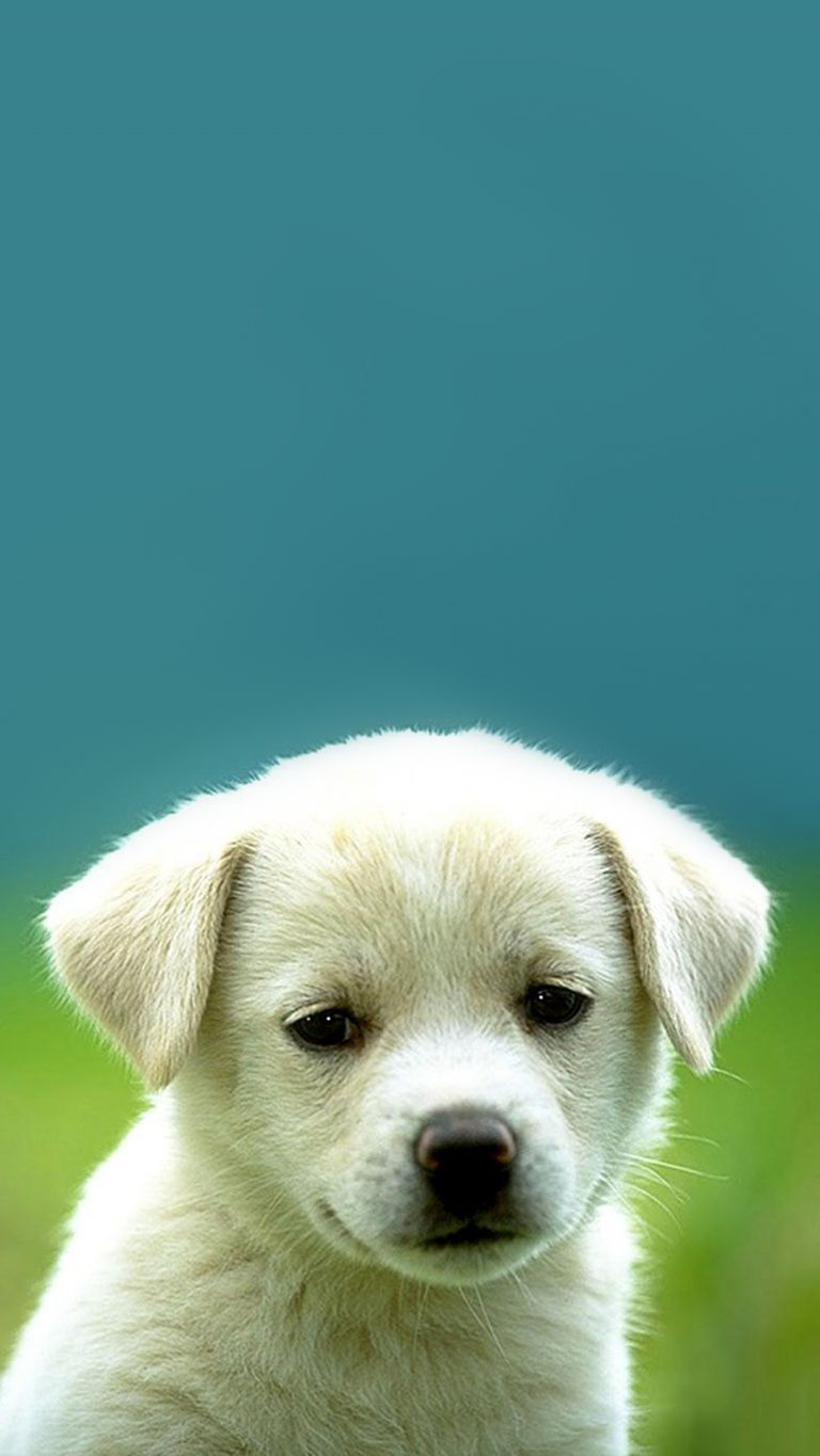puppy wallpaper 175