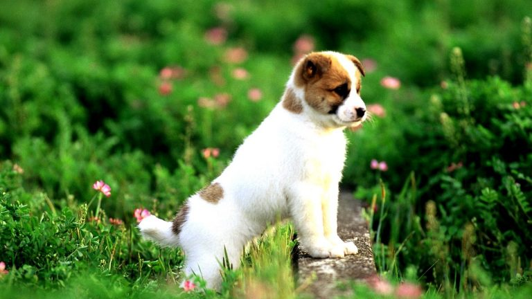 puppy wallpaper 177