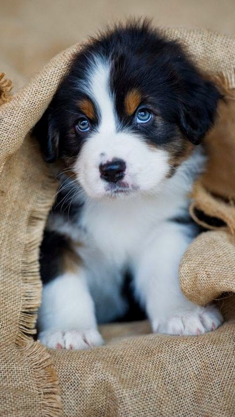 puppy wallpaper 180