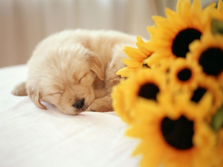 puppy wallpaper 191