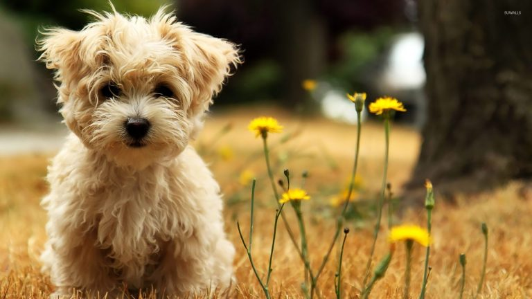 puppy wallpaper 198