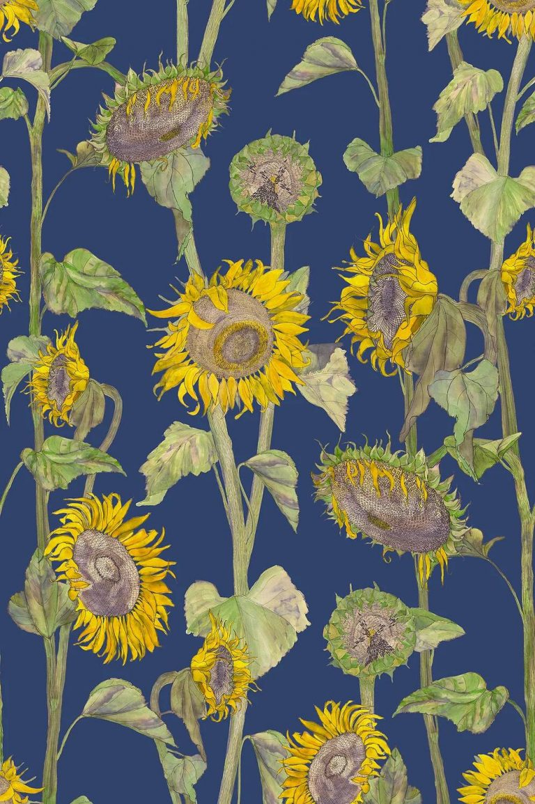 sunflower wallpaper 67