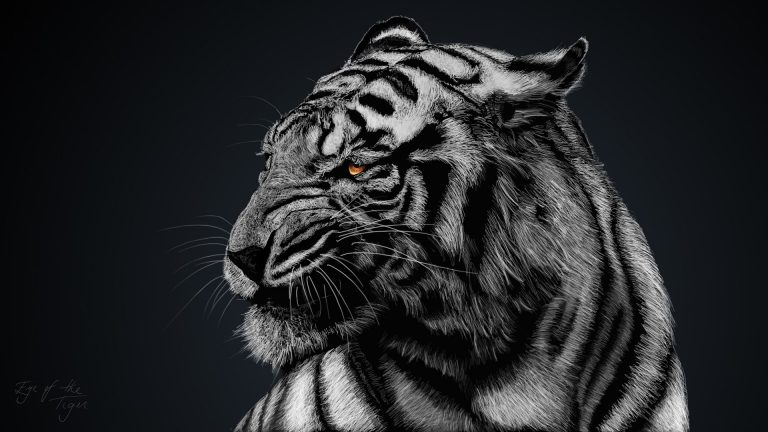 tiger wallpaper 131