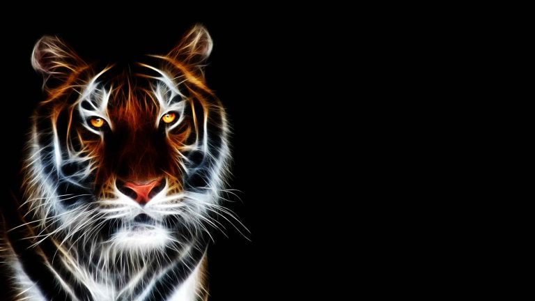 tiger wallpaper 152