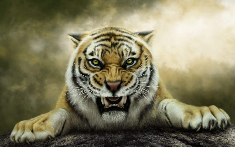 tiger wallpaper 179