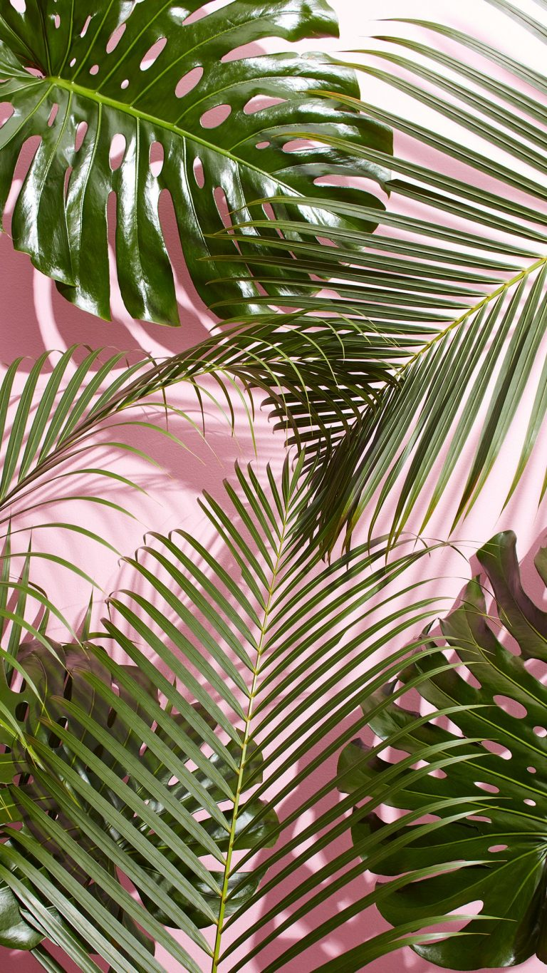 tropical wallpaper 25