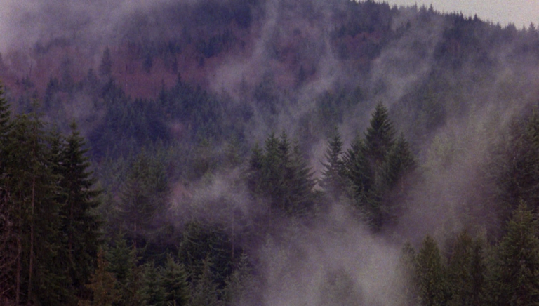 twin peaks wallpaper 46